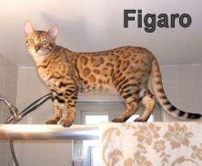 Figaro2011